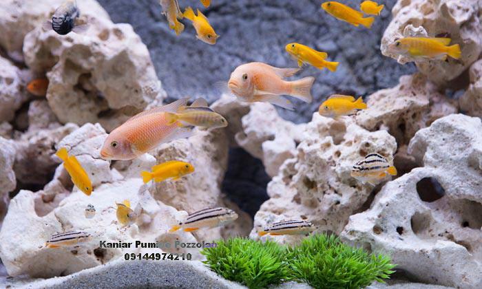 درباره پوکه معدنی جهت استخر ماهی
