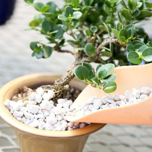 تاثیر پوکه معدنی در کشت گیاهان آپارتمانی